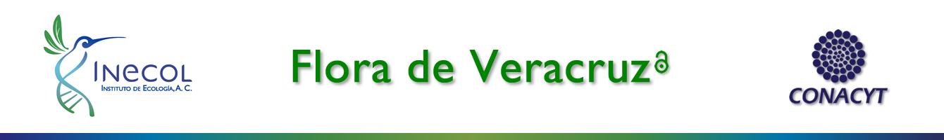 banner_flora_veracruz1